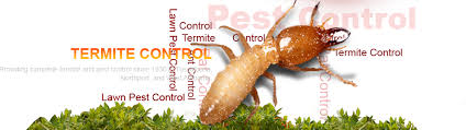 All about Termite Control Flying Solo