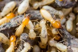What Does What Termite Control Mean?