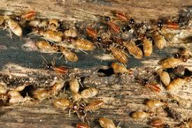 What Does Greedy Termite & Pest Control Adelaide Mean?