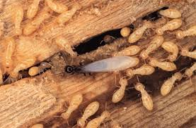 The 25-Second Trick For Termite Control Chemical