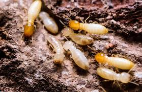 Some Of Termite Control Methods At Home