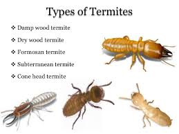 Termite Control In Plants - An Overview