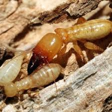 Little Known Questions About Termite Control Tablets.