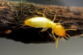 Termite Control License Things To Know Before You Get This