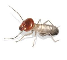 All About Why Termite Control