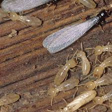 Some Known Facts About Termite Control Application.