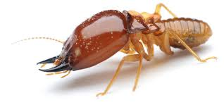 4 Easy Facts About Termite Control Blog Explained