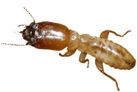 Indicators on Termite Control System You Need To