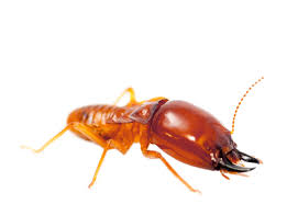 Termite Control Pesticides Things To Know Before You Get This