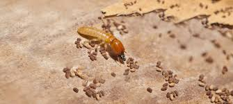 The Main Principles Of Termite Control Natural Remedies