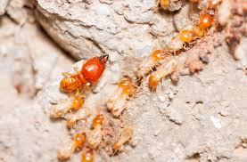 All About What Is Termite Pest Control