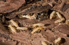 Some Ideas on Termite Control In Garden You Need To
