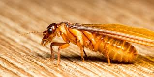 The Main Principles Of Termite Control Yourself