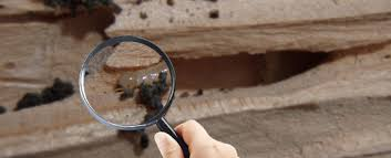 Things about Rentokill Termite & Pest Control Adelaide