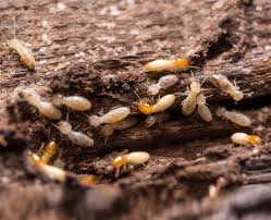 The Basic Principles Of Termite Control Methods