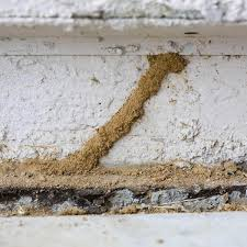 8 Easy Facts About Termite Control Under Slab Explained