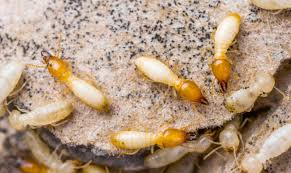 Getting The Termite Control Yourself To Work