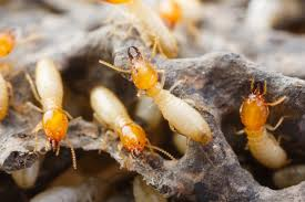 Termite Control Home Treatment - An Overview