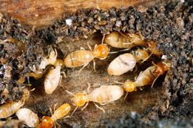 The smart Trick of Termite Control Application That Nobody is Discussing