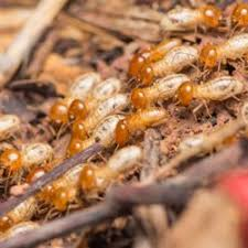 The 8-Minute Rule for Termite Control Tech