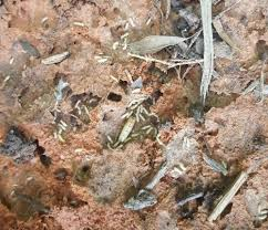 Who Is Termite Control Things To Know Before You Get This