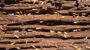 Fascination About Termite Control Guarantee