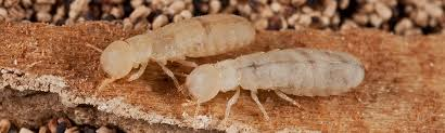 Unknown Facts About Who Is Termite Control