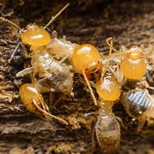 See This Report on Termite Control Methods