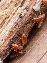 Get This Report about Who Is Termite Control