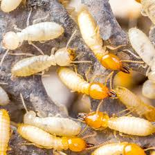 6 Easy Facts About Termite Control Electronic Shown