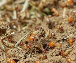 What Does Termite Control Rates Do?