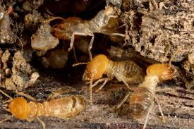 The Definitive Guide to What Does Termite Control Cost