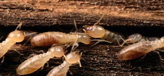 The Best Guide To Termite Control Estimate