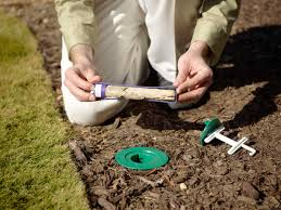 The Ultimate Guide To Termite Control In Lawns