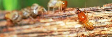 A Biased View of Termite Control Liquid