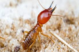 The Main Principles Of Termite Control Using Orange Oil