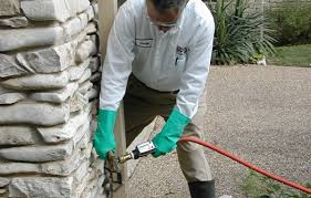 All about Termite Control For Lawns