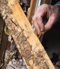 8 Simple Techniques For Termite Control Methods