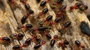 The Definitive Guide to What Termite Control