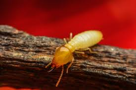 Some Known Facts About Xterm Termite Control.