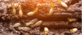 What Does Termite Control Start Local Mean?