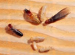 The smart Trick of Termite Control Charges That Nobody is Discussing