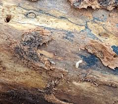 An Unbiased View of Termite Control Using Orange Oil