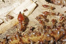 4 Easy Facts About Termite Control Effectiveness Shown